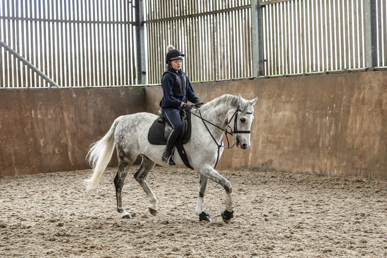 Equine 16
